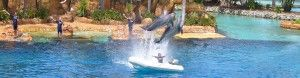 accommodation near Gold Coast theme parks